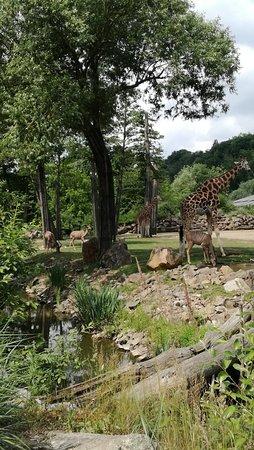 Zoo Plzeň: IMG_20180608_113426_large.jpg