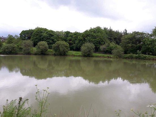 Ashwater, UK: Blagdon Farm Pool