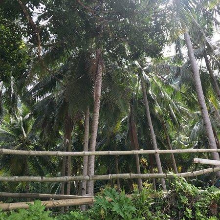 Linapacan, Filippinerna: photo1.jpg