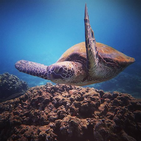 Destination Diving And Snorkel Maui