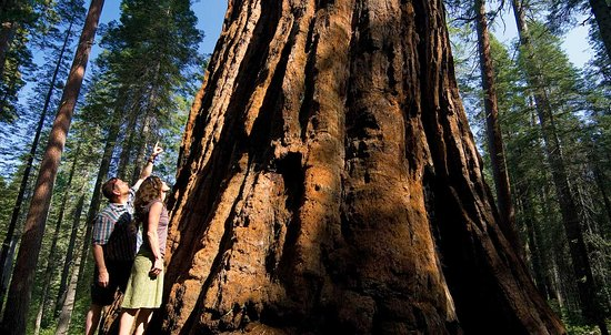 Arnold, CA: Calaveras Big Trees State Park   OARS
