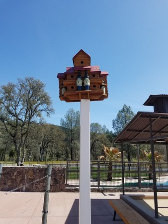 Clearlake Oaks, CA: Even the birds are welcome here.  Cheers!!