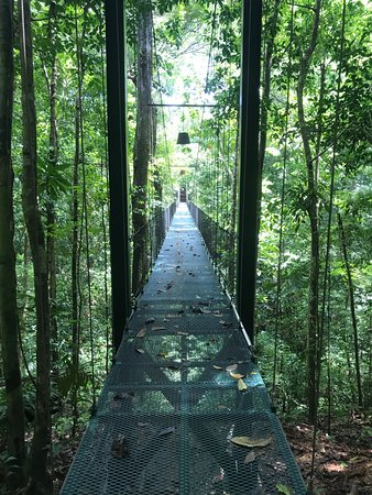 Bosque del Cabo Rainforest Lodge: Suspension bridge to the tropical gardens