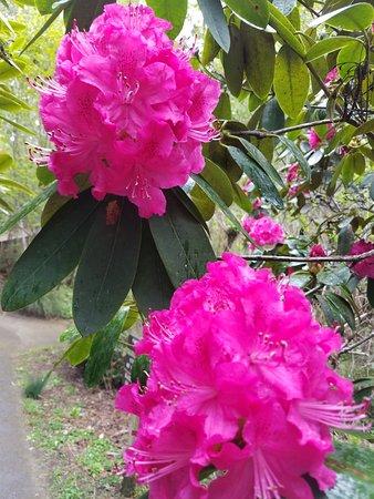 Mendocino Coast Botanical Gardens: Oh so BEAUTIFUL!