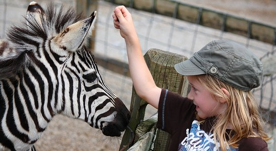 Laurel Highlands, PA: Meet Exotic Animals at Living Treasures Wild Animal Park