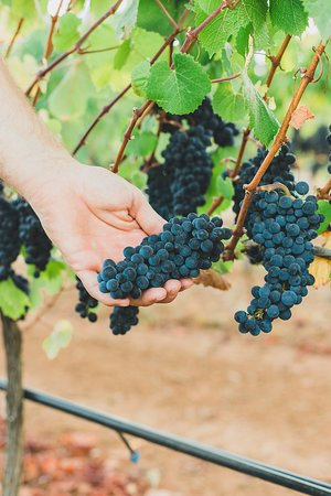 Five Fourteen Vineyards