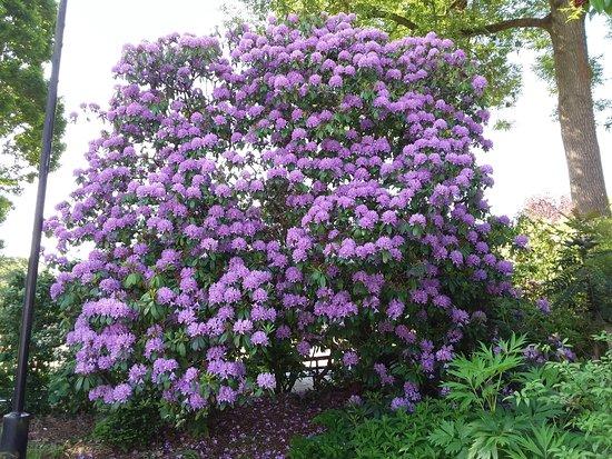 Botanic Gardens: Rhododendron