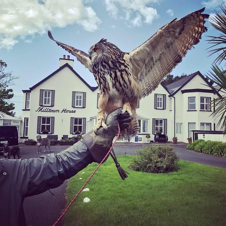 Dingle Falconry Experience