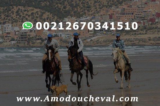 Agadir Horse & Camel