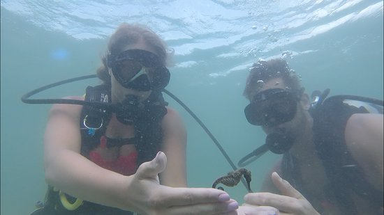 Try Scuba Diving 사진