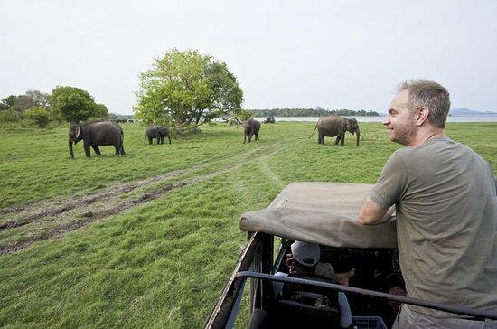 Minneriya safari From Sigiriya Hotels...