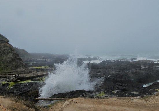 Cape Perpetua Scenic Area: Spouting horn