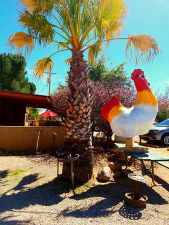 """Wisdom's Cafe: Wisdom's Rooster - """"CawCAW!"""""""