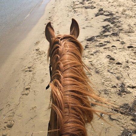 Naxos Horse Riding Club: photo0.jpg