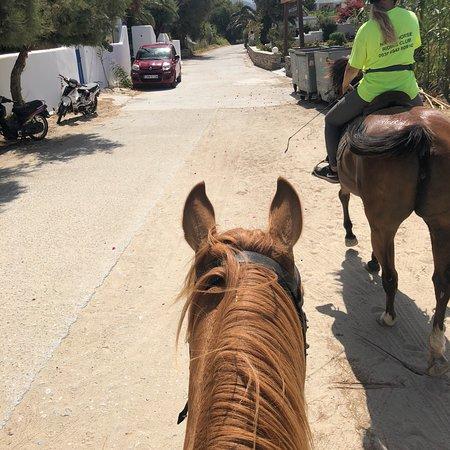 Naxos Horse Riding Club: photo1.jpg