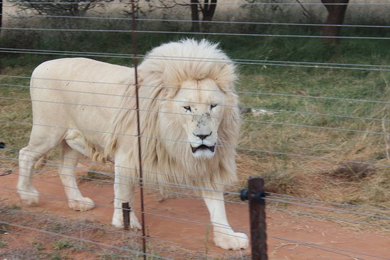 Petrusburg, Južná Afrika: Kandirri Game Lodge