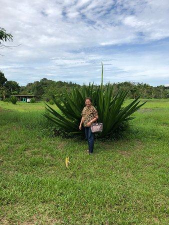 Malaybalay City, Philippines: Huge plant.