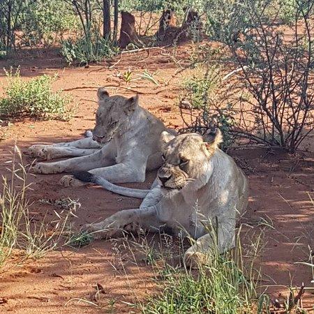 Madikwe Game Reserve, South Africa: IMG_20180303_160529_105_large.jpg