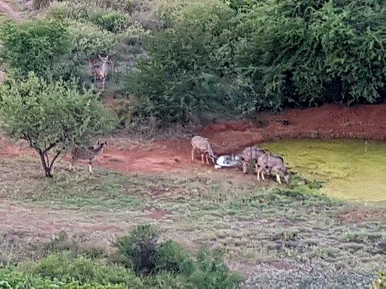 Ohrigstad, South Africa: 20180508_171151_large.jpg
