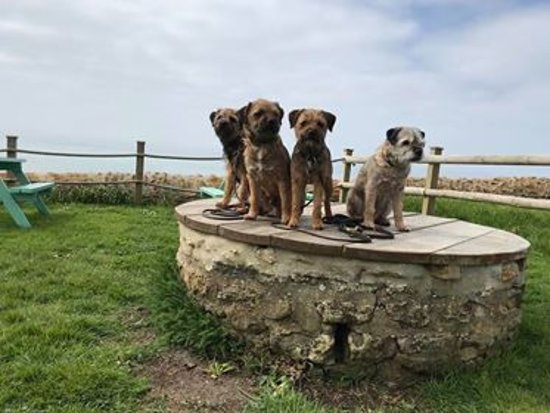 Burton Bradstock, UK: Dog friendly