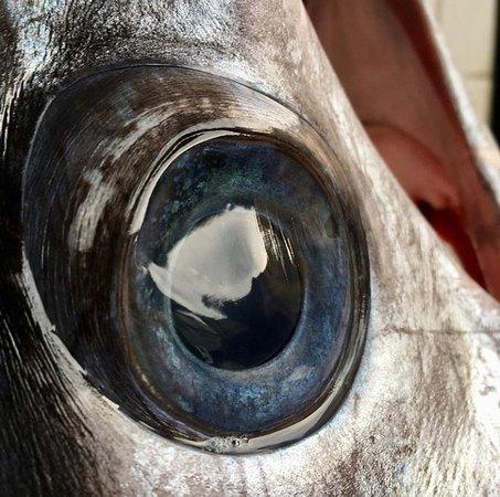 Omega 3 Benincasa: L'occhio del nostro Pesce Spada
