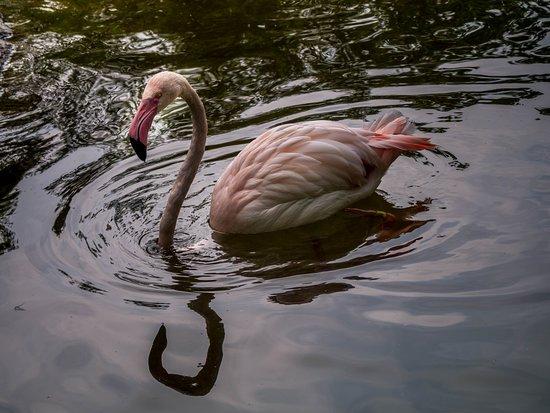 Entrée générale au zoo et jardin botanique de Cincinnati: Pink flamingo