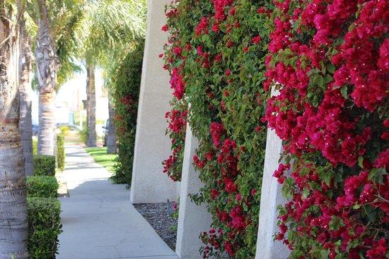 O'Cairns Inn & Suites: Exterior walkway