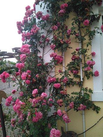 Mulheim an der Mosel, Germany: Spaziergang im Hotelpark