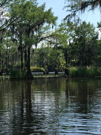 Caddo Lake Bayou Tours