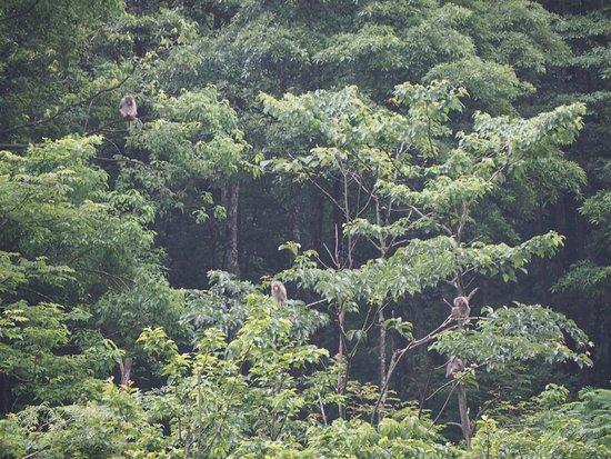 Fengkai County, China: 野生の?サル