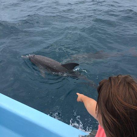 Go Sea Tours