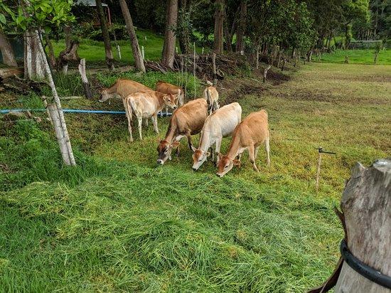 Sumpango, Guatemala: IMG_20180602_133436_large.jpg