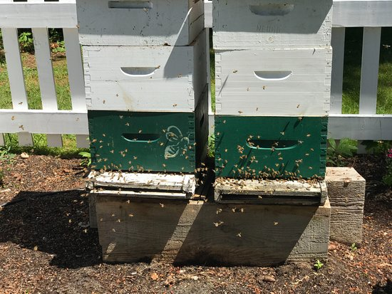 Historic Stewart Farm: Two active beehives in a fenced off area are of interest to the amateur bee keeper.