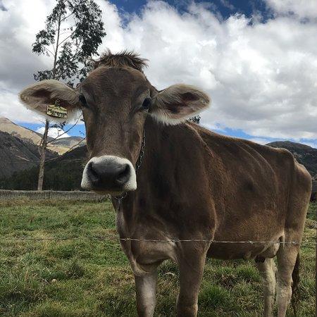 Pampas, Perù: photo7.jpg