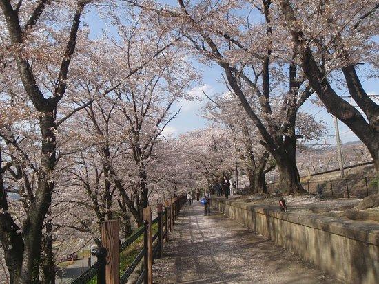 Jinrokuzakura Park