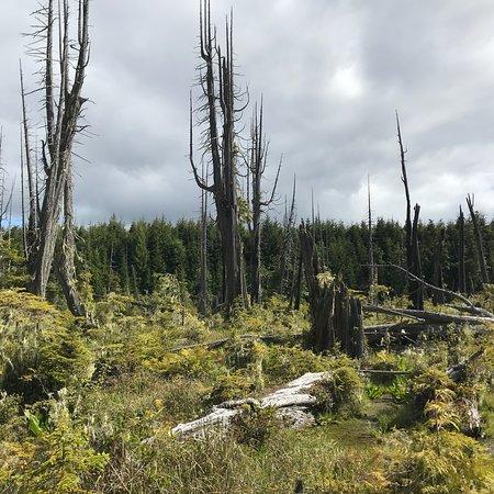 Alert Bay Ecological Park, Alert Bay, British Columbia: photo1.jpg