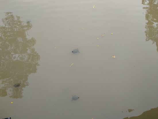 Chinese and Japanese Gardens: Chinese garden turtle