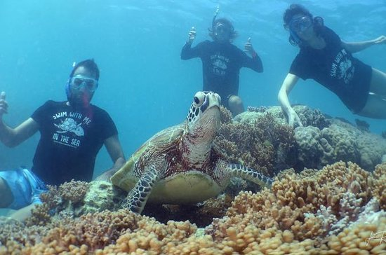 Tour privato di Noumea Turtle
