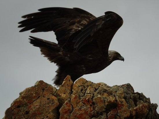 Tundra Wilderness Tour : Eagle