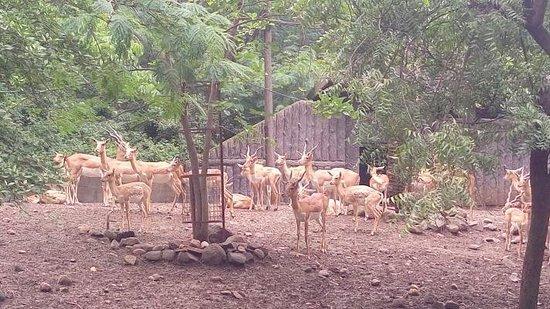 Rajiv Gandhi Zoological Park Photo