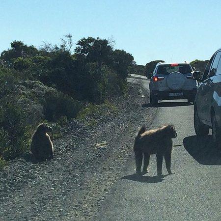Cape Peninsula National Park, África do Sul: photo5.jpg