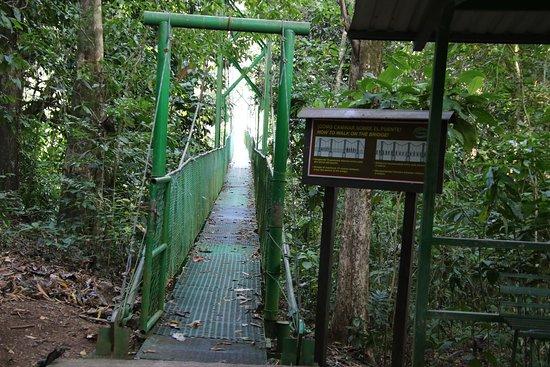 Tirimbina Rainforest Lodge: Hanging bridge