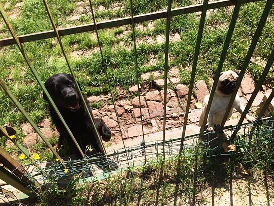 Il Casale del Cotone: Die 2 Spasshunde