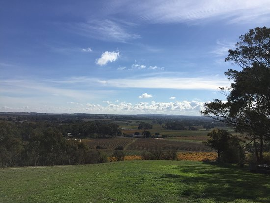 Bethany Wines: View from Winery