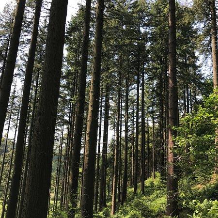 Doach Wood: photo0.jpg