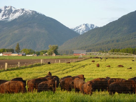 Barking Mad Farm & Country B&B: Buffalo and Wallowas from Deck
