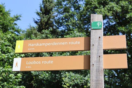 Harskamp, Niederlande: Het begin van de wandeling is duidelijk aangegeven op de parkeerplaats.