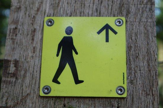 We volgen de gele bordjes voor de Harskamperdennen route.