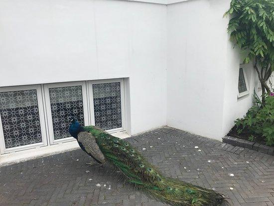 โรงแรมนิมบ์ ภาพถ่าย