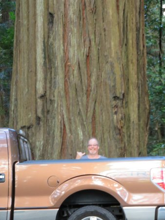 Redwood Highway : Amazing size of tree